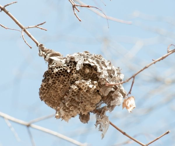 Bee and Wasp Hive Removal