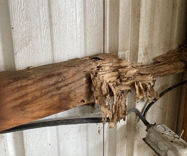 Wood Damage
